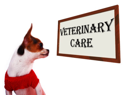 Annual Exams for Your Pets Result in Early Illness Detection and Less Disease