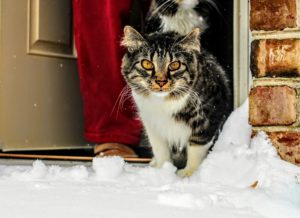 pets safety in the winter