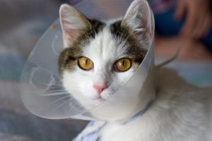 Cherry Hill Laser Surgery for Pets